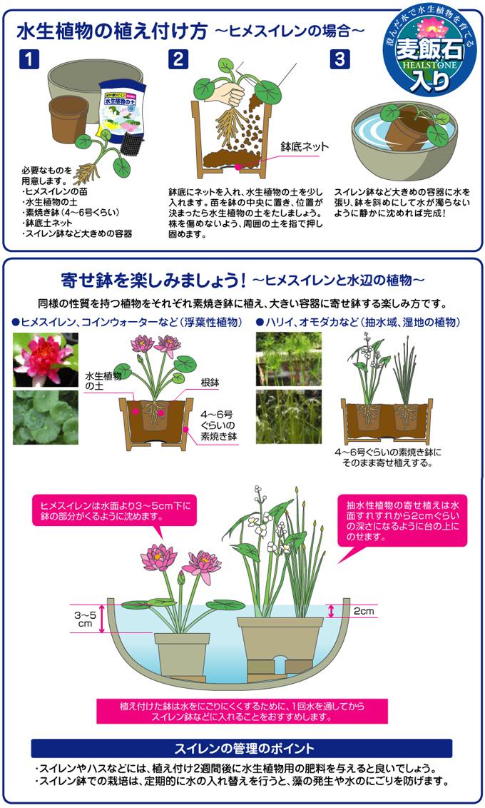 水生植物の土