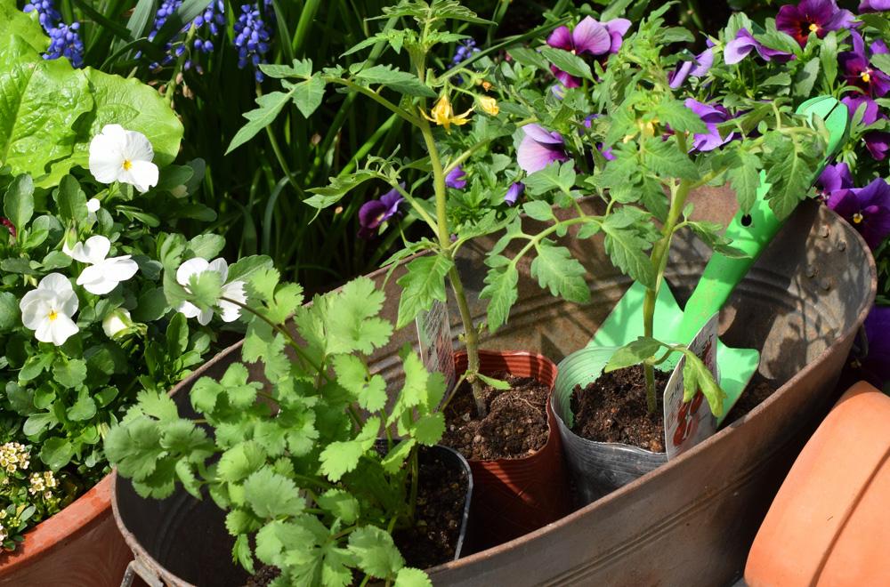 花、野菜づくり