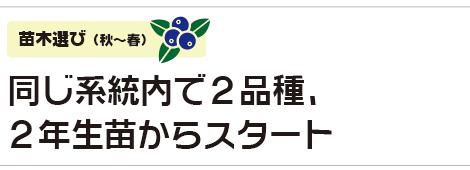 同じ系統内で2品種、2年生苗からスタート|苗木選び(秋〜春)