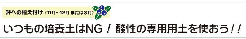 いつもの培養土はNG!酸性の専用用土を使おう!!|鉢への植え付け(11月〜12月 または3月)