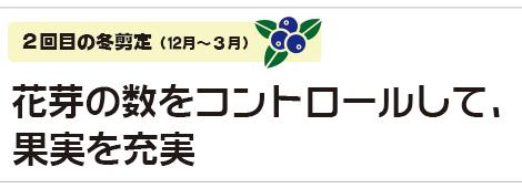 花芽の数をコントロールして、果実を充実|2回目の冬剪定(12月〜3月)