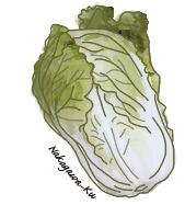 園芸レッスン70 へぇ〜、そうだったの!? 「あいちの伝統野菜」野崎白菜2号