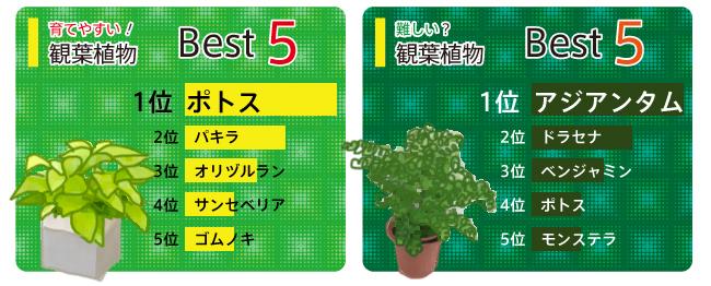 花ごころ 花咲ライフ114 観葉植物