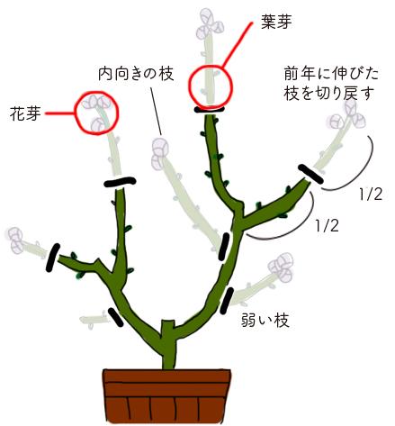 新しく伸びた枝は、とにかく半分にカット!