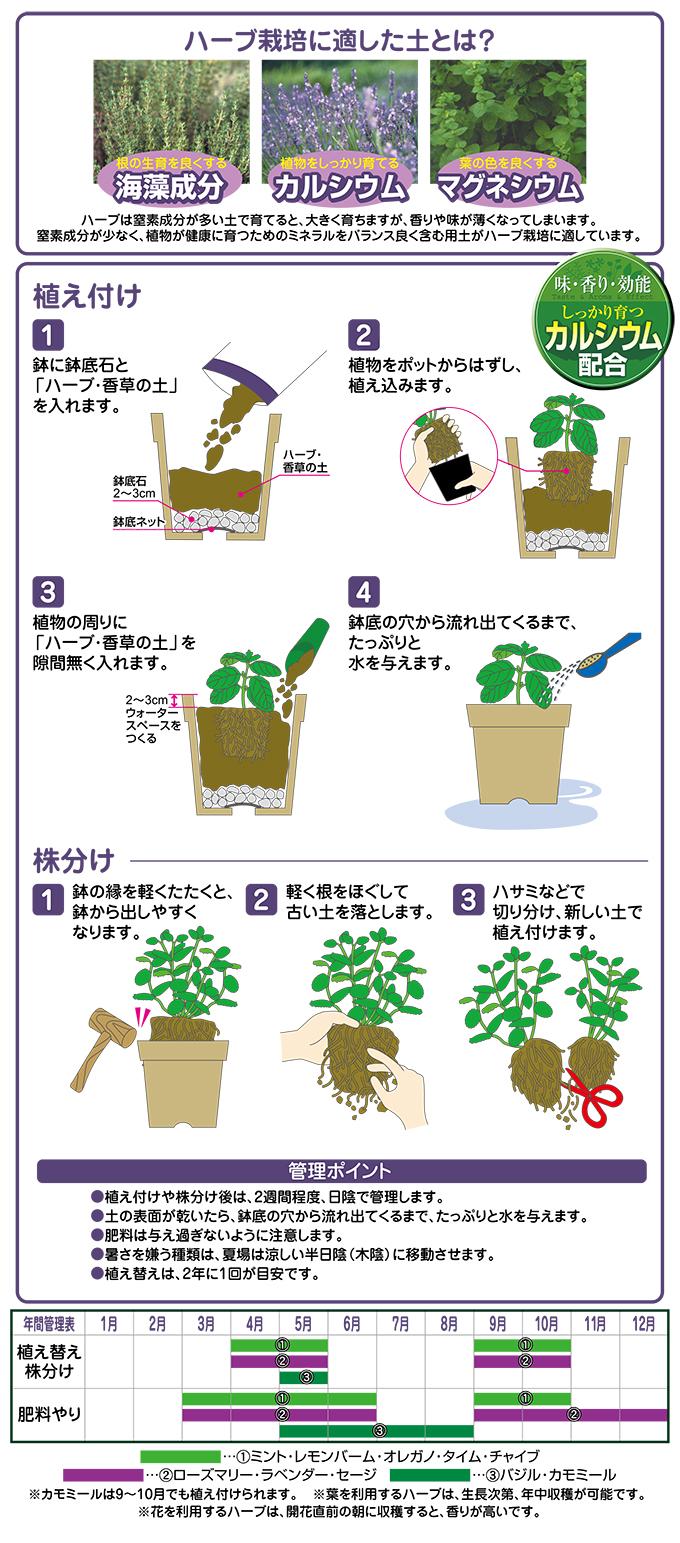ハーブ香草の土