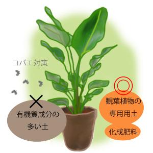 観葉 植物 コバエ 対策