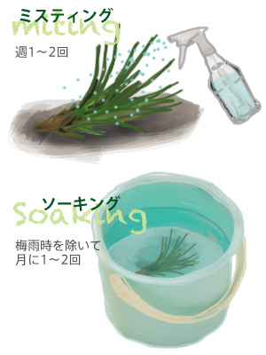 花ごころ 花咲ライフ114 観葉植物 エアプランツ 水やり