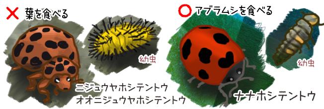 ジャガイモ 害虫 ニジュウヤボシテントウ
