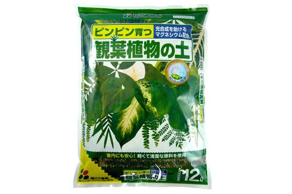 ヒカキンも使った!花ごころで一番売れてる「観葉植物の土」、春が使...