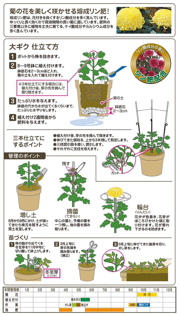 菊の土お見事!