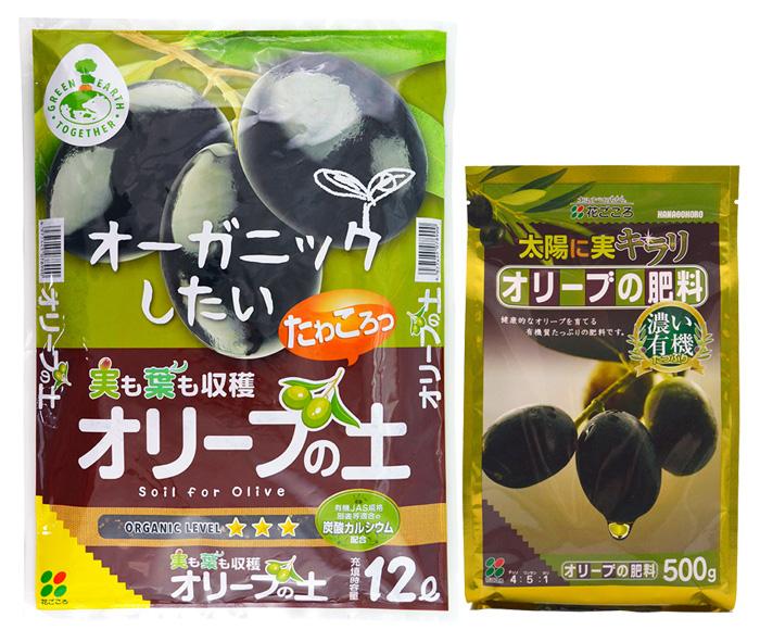 オリーブ植えつけ
