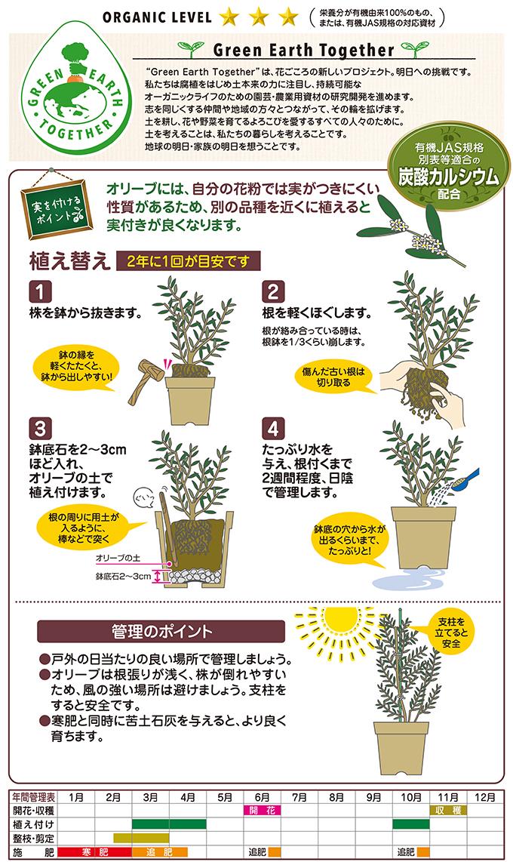 実も葉も収穫 オリーブの土