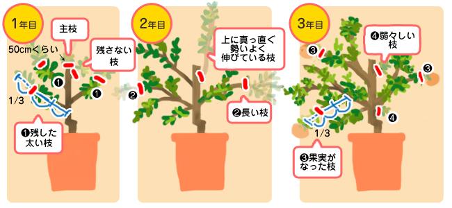 花ごころ 園芸レシピ74/ぎゅぎゅっとビタミンC『レモン・ミカン・柑橘の肥料』 剪定