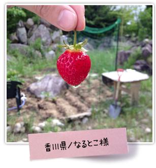 花ごころ 花咲ライフ114 お庭自慢 香川県 なるとこ様
