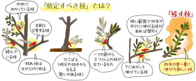 「剪定すべき枝」とは?