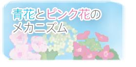 青花とピンク花のメカニズム