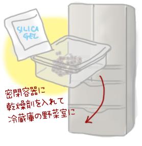 タネは冷蔵庫へ