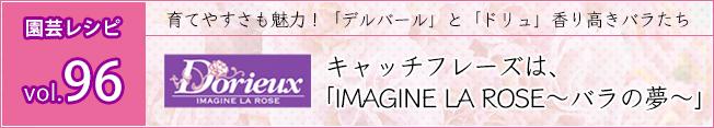 ドリュ:キャッチフレーズは、「IMAGINE LA ROSE~バラの夢~」